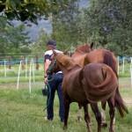 Pferde rausstellen